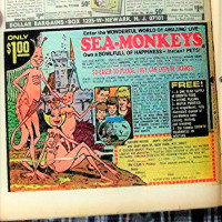 sea monkeys 2.JPG