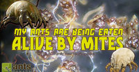 My-Ants-Are-Being-Eaten-Alive-by-Mites-960x500.jpg
