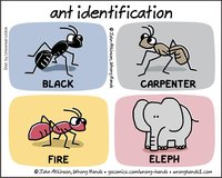 ant-identification.jpg